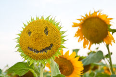 Smiley face of a sunflower, cheerful smile, Stock Image