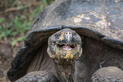 Smiley Galapagos Photo stock