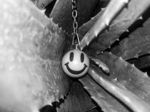 Smiley inavera Stock Photo