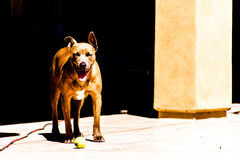 Smiley Pit buil Royalty Free Stock Images