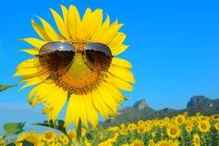 Smiley słonecznik jest ubranym okulary przeciwsłonecznych Obraz Stock