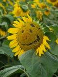 Smiley-Sonnenblume Stockfoto