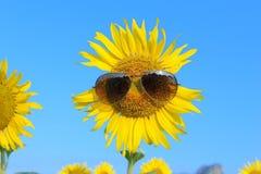 Smiley Sunflower bärande solglasögon arkivfoto
