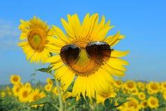 Smiley Sunflower die zonnebril dragen royalty-vrije stock foto