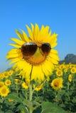 Smiley Sunflower die zonnebril dragen stock afbeeldingen