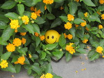 Smiley Toy. A hidden yellowey smile between green leaves Royalty Free Stock Photography