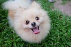 Smileyhund Arkivfoto