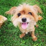Smileyhund Royaltyfri Fotografi
