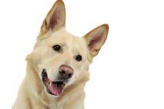 Smilie font face au portrait de chien dans le studio blanc Image stock