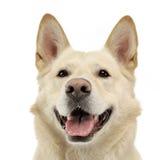 Smilie font face au portrait de chien dans le studio blanc Photos stock