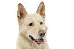 Smilie font face au portrait de chien dans un studio blanc Photographie stock