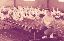 Smiling adult woman among white gooses livestock Royalty Free Stock Photography