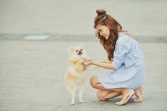 Training dog Royalty Free Stock Image