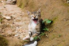 Smiling baby kitten portrait stock images