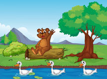 A smiling bear and ducks Royalty Free Stock Image