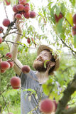 Smiling bearded boy farmer who gathers peaches from the orchard with straw hat Royalty Free Stock Photo