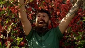 Smiling bearded man in spring blooming park. Gardener concept. Bearded man with fresh haircut posing with bloom flower. Bush. Hipster enjoys spring near purple stock footage