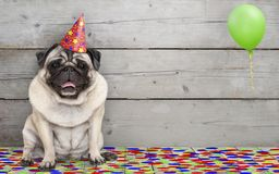 Smiling birthday party pug dog, with confetti and balloon, sitting down celebrating, on old wooden backgrond stock images