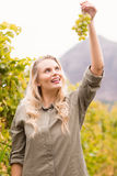 Smiling blonde winegrower holding a grape Royalty Free Stock Image