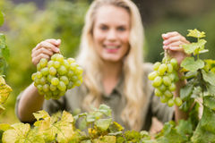 Smiling blonde winegrower holding grapes Stock Image