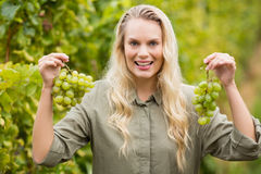 Smiling blonde winegrower holding grapes Royalty Free Stock Photography