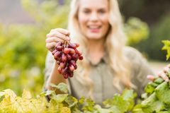 Smiling blonde winegrower holding a red grape Stock Photos