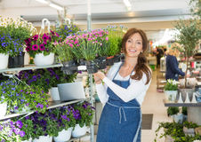 Smiling Botanist Carrying Crate Full Of Flower. Portrait of smiling mid adult botanist carrying crate full of flower plants in shop Royalty Free Stock Photo