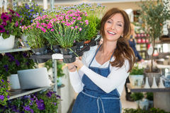 Smiling Botanist Carrying Crate Full Of Flower. Portrait of smiling botanist carrying crate full of flower plants in store Royalty Free Stock Photos