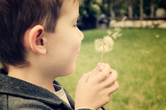 Smiling boy blowing on a dandelion toning effect with vanilla. Horizontal Royalty Free Stock Image