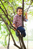 Climbed in a tree Royalty Free Stock Photo