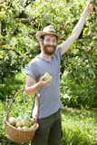 Smiling boy farmer who gathers pears from trees with straw hat and basket Royalty Free Stock Photo