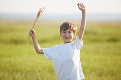 Smiling boy in the field at sunny summer morning Stock Photos