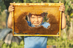 Smiling boy holding frame of honeycomb royalty free stock photo