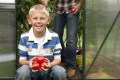 Smiling boy holding ripe tomatoes in greenhouse garden Royalty Free Stock Photos