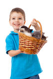 Smiling boy picks up a basket with kittens Royalty Free Stock Images