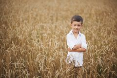 Smiling boy in summer field. The concept of freedom and happy childhood stock photography