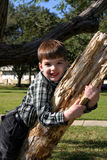 Smiling boy on tree branch. Young Caucasian boy standing in a tree at the park smiling Stock Photo