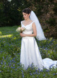 Smiling bride in bluebonnet field. A woman with dark hair in a wedding gown holds a bouquet Stock Images