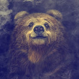 Smiling brown bear in the smoke Royalty Free Stock Photography