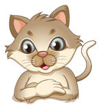 A smiling brown cat Stock Images