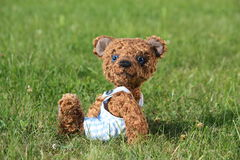 Smiling brown teddy bear in blue shorts Stock Image