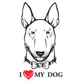 Smiling bull terrier with a bow tie Royalty Free Stock Photo