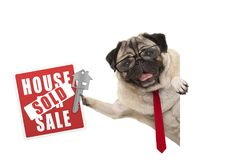 Smiling business pug dog with glasses and tie, holding up red house sold sign and key stock photo