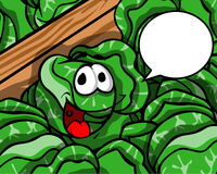 Smiling cabbage with speech bubble Royalty Free Stock Image