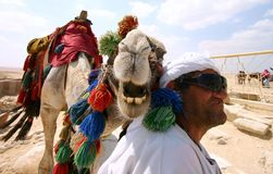 Smiling camel. And serious guy stock photo