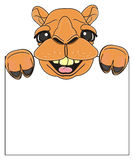 Smiling camel peek up from blank plate. Happy face of camel peek up from clean poster Royalty Free Stock Images