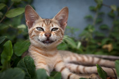 Smiling Cat Royalty Free Stock Images
