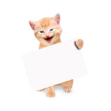 Smiling cat with banner isolated. On white background Stock Images