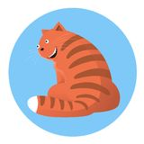 Smiling cat Stock Photography