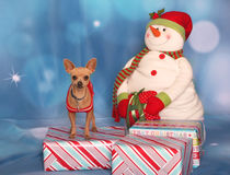 Smiling Chihuahua in a holiday portrait Stock Photo